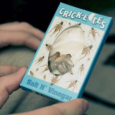 Crickets!